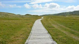 Wooden boardwalk through green meadow