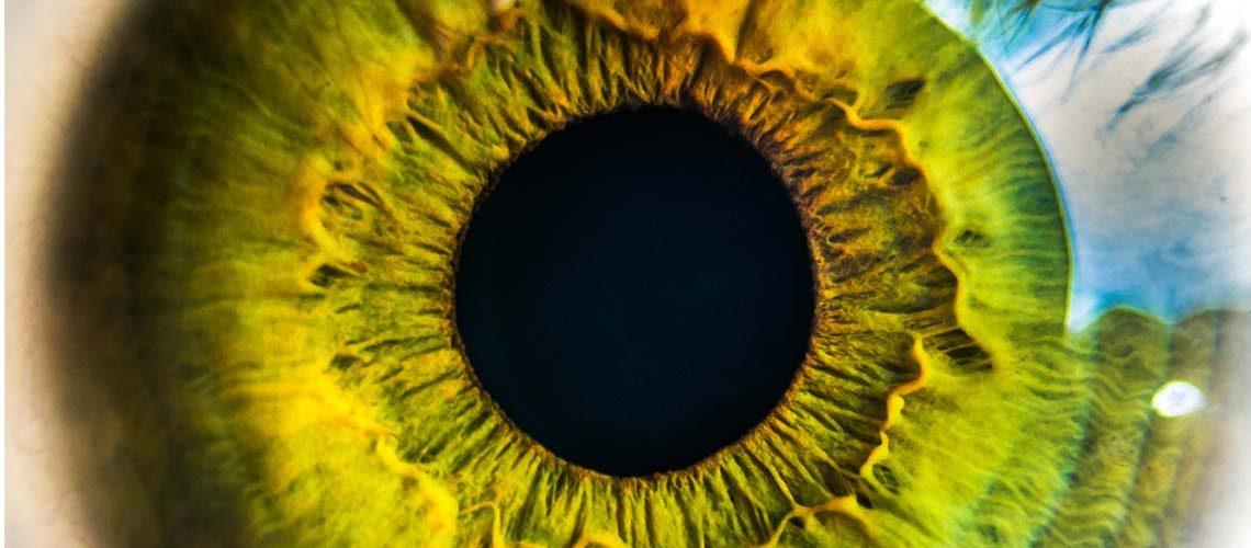 closeup image of a green eye